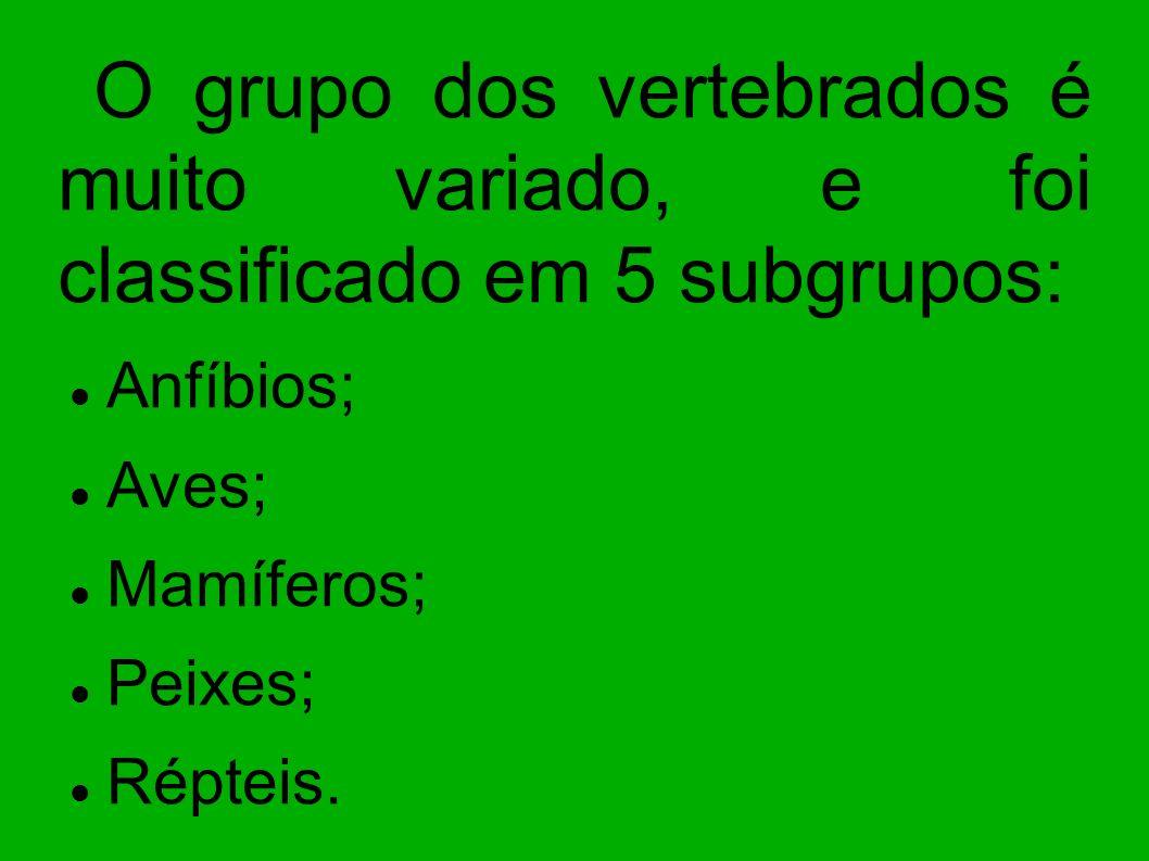 O grupo dos vertebrados é muito variado, e foi classificado em 5 subgrupos: Anfíbios; Aves; Mamíferos; Peixes; Répteis.