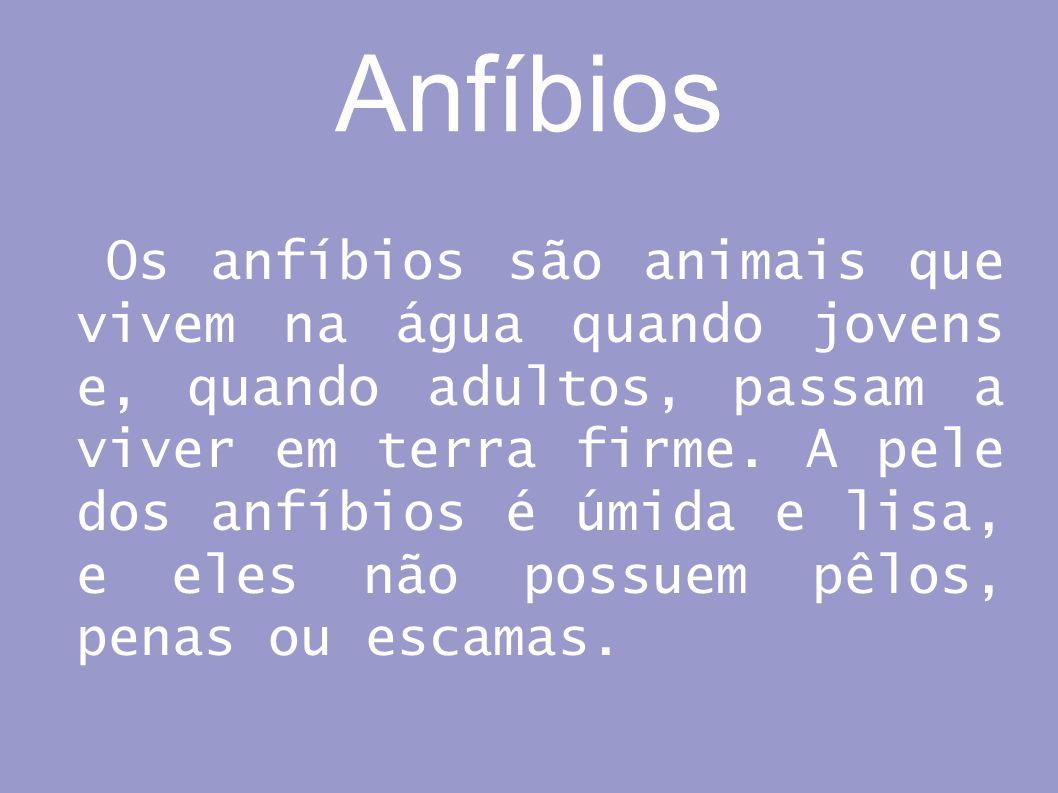 Anfíbios Os anfíbios são animais que vivem na água quando jovens e, quando adultos, passam a viver em terra firme. A pele dos anfíbios é úmida e lisa,