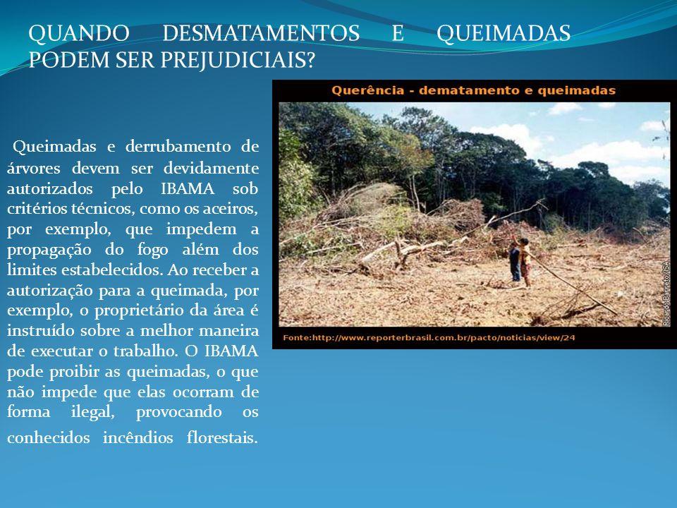 QUANDO DESMATAMENTOS E QUEIMADAS PODEM SER PREJUDICIAIS? Queimadas e derrubamento de árvores devem ser devidamente autorizados pelo IBAMA sob critério