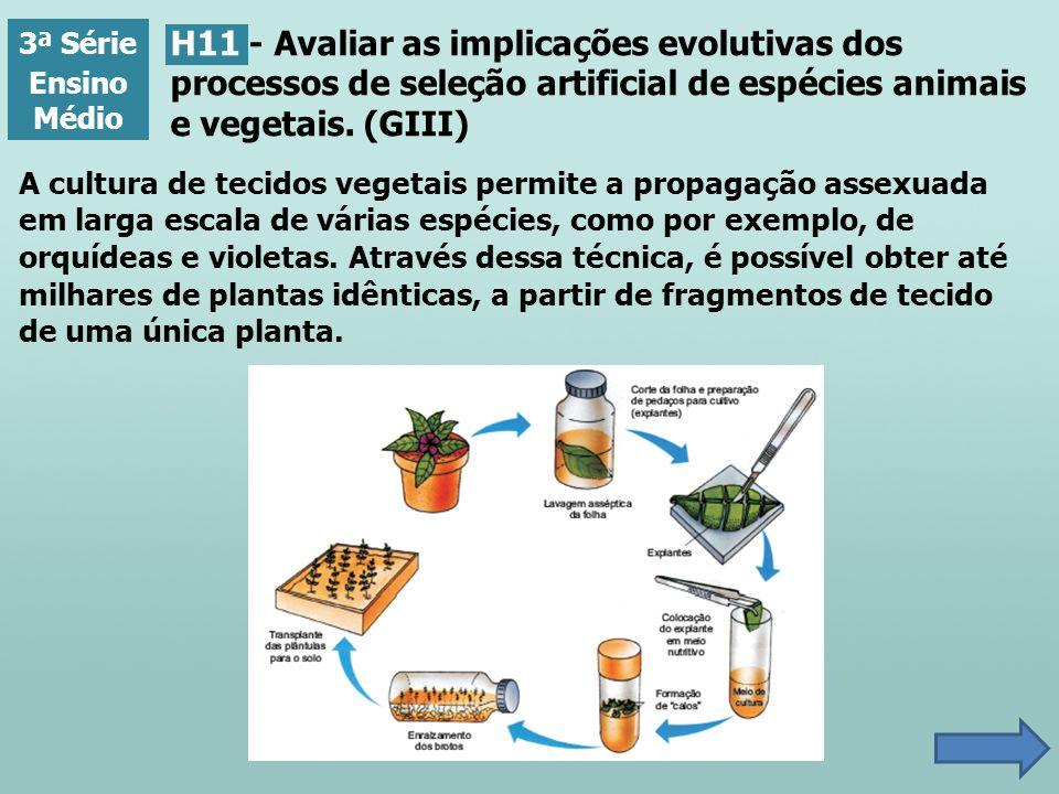 3ª Série Ensino Médio H11 - Avaliar as implicações evolutivas dos processos de seleção artificial de espécies animais e vegetais. (GIII) A cultura de
