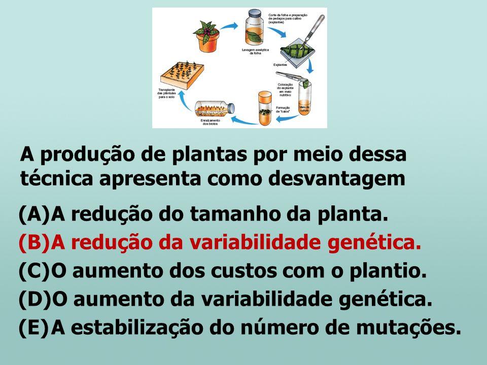 A produção de plantas por meio dessa técnica apresenta como desvantagem (A)A redução do tamanho da planta. (B)A redução da variabilidade genética. (C)