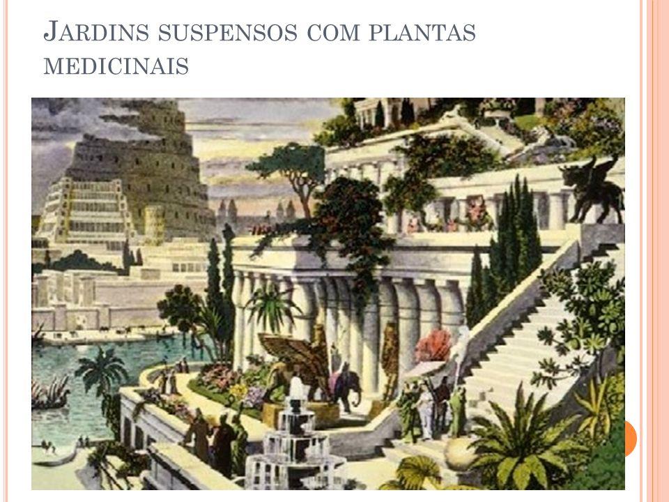 J ARDINS SUSPENSOS COM PLANTAS MEDICINAIS