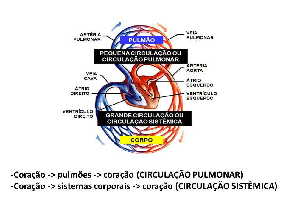 -Coração -> pulmões -> coração (CIRCULAÇÃO PULMONAR) -Coração -> sistemas corporais -> coração (CIRCULAÇÃO SISTÊMICA)