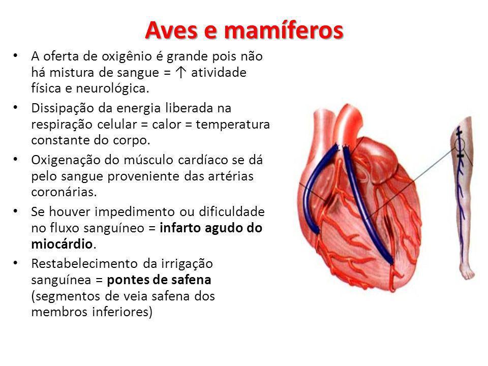 A oferta de oxigênio é grande pois não há mistura de sangue = atividade física e neurológica. Dissipação da energia liberada na respiração celular = c