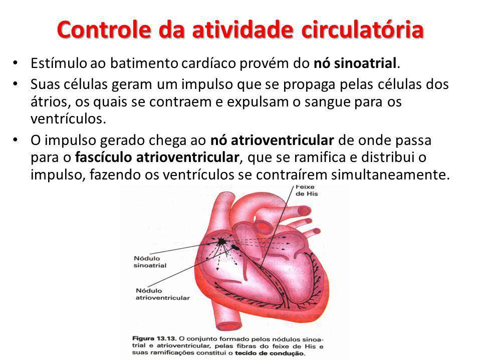 Estímulo ao batimento cardíaco provém do nó sinoatrial. Suas células geram um impulso que se propaga pelas células dos átrios, os quais se contraem e