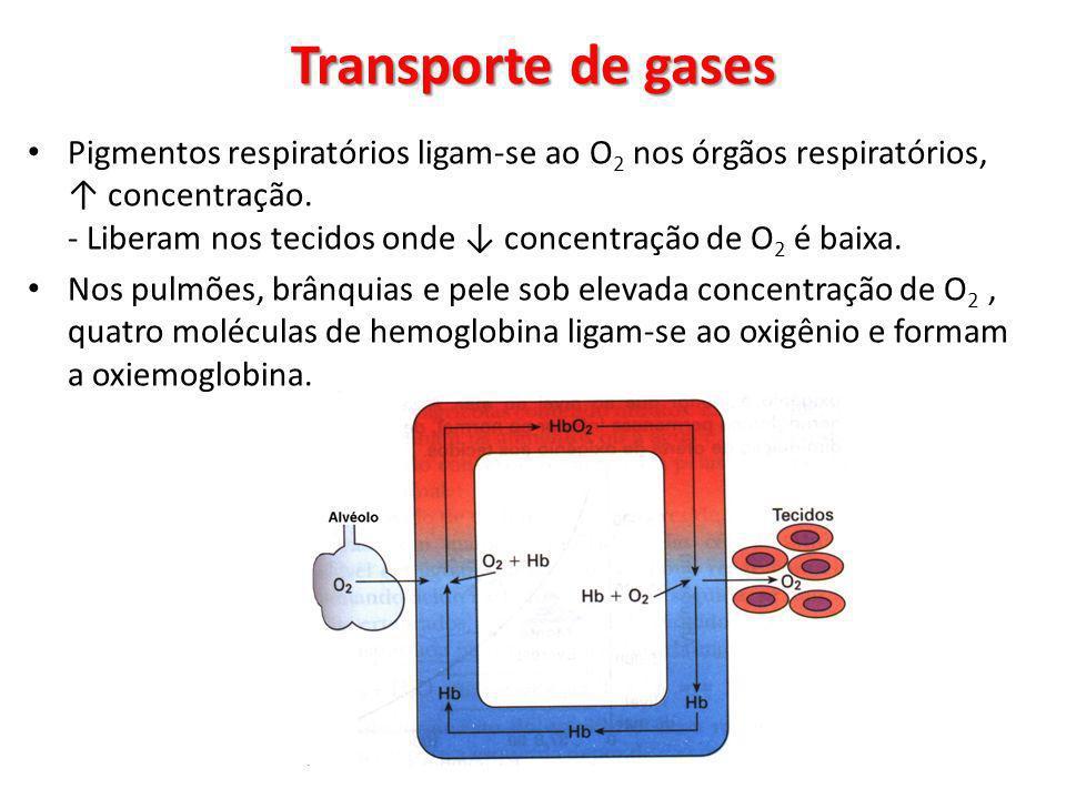 Pigmentos respiratórios ligam-se ao O 2 nos órgãos respiratórios, concentração. - Liberam nos tecidos onde concentração de O 2 é baixa. Nos pulmões, b