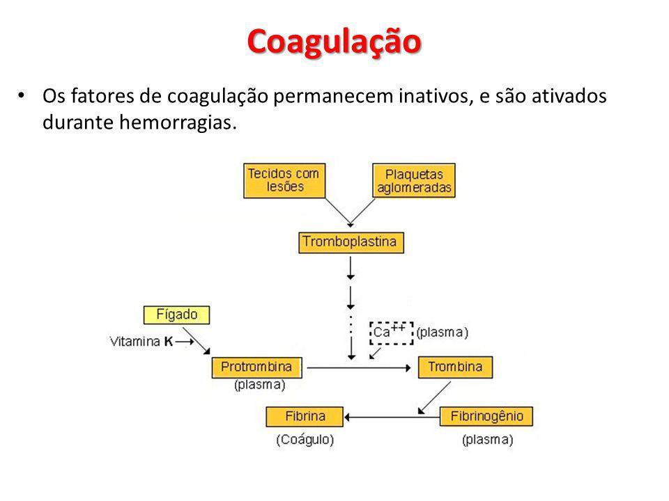 Os fatores de coagulação permanecem inativos, e são ativados durante hemorragias. Coagulação