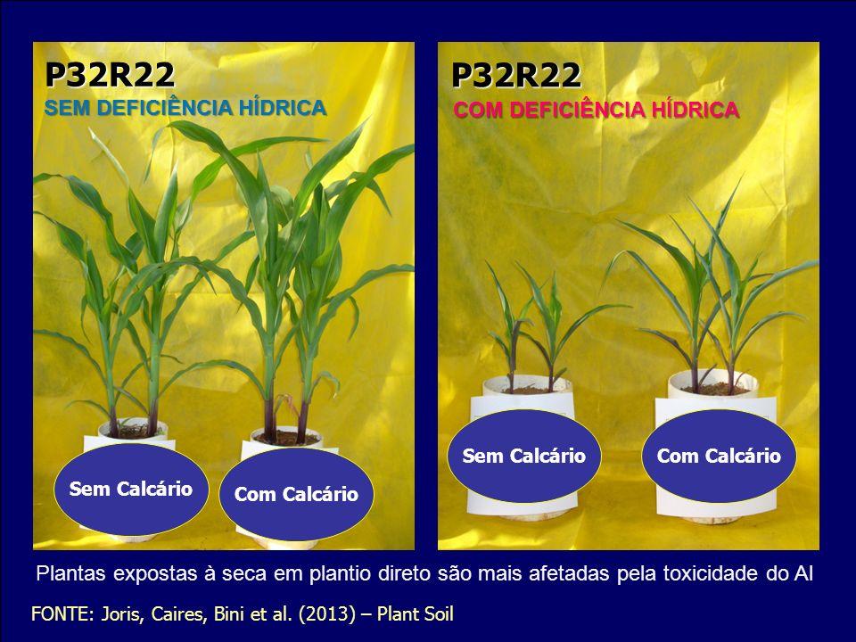 Sem Calcário Com Calcário Sem CalcárioCom Calcário P32R22 P32R22 SEM DEFICIÊNCIA HÍDRICA COM DEFICIÊNCIA HÍDRICA FONTE: Joris, Caires, Bini et al. (20