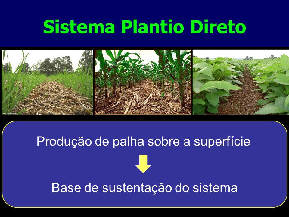 Sistema Plantio Direto Produção de palha sobre a superfície Base de sustentação do sistema