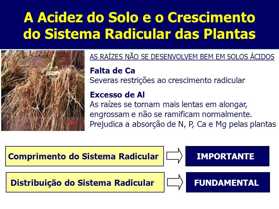 A Acidez do Solo e o Crescimento do Sistema Radicular das Plantas AS RAÍZES NÃO SE DESENVOLVEM BEM EM SOLOS ÁCIDOS Falta de Ca Severas restrições ao c