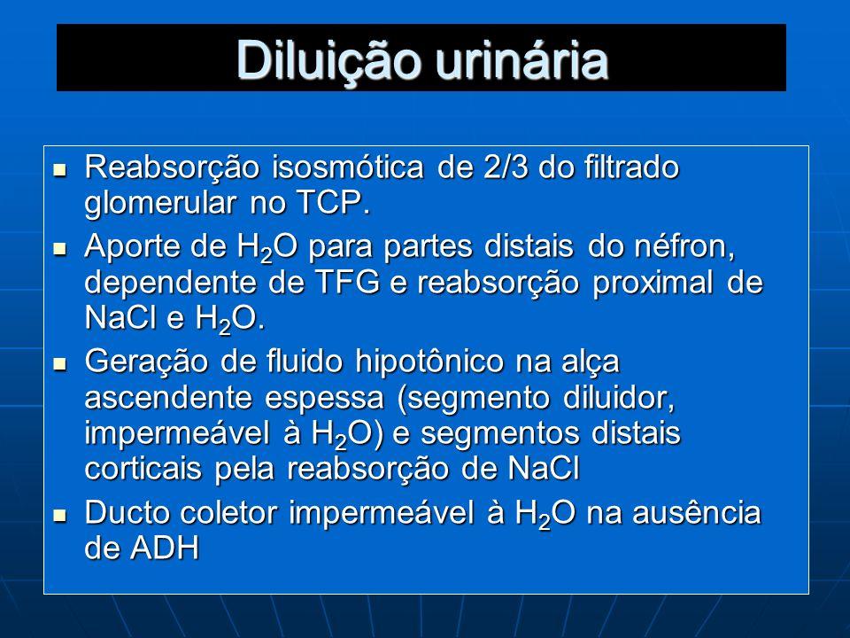 Diluição urinária Reabsorção isosmótica de 2/3 do filtrado glomerular no TCP. Reabsorção isosmótica de 2/3 do filtrado glomerular no TCP. Aporte de H