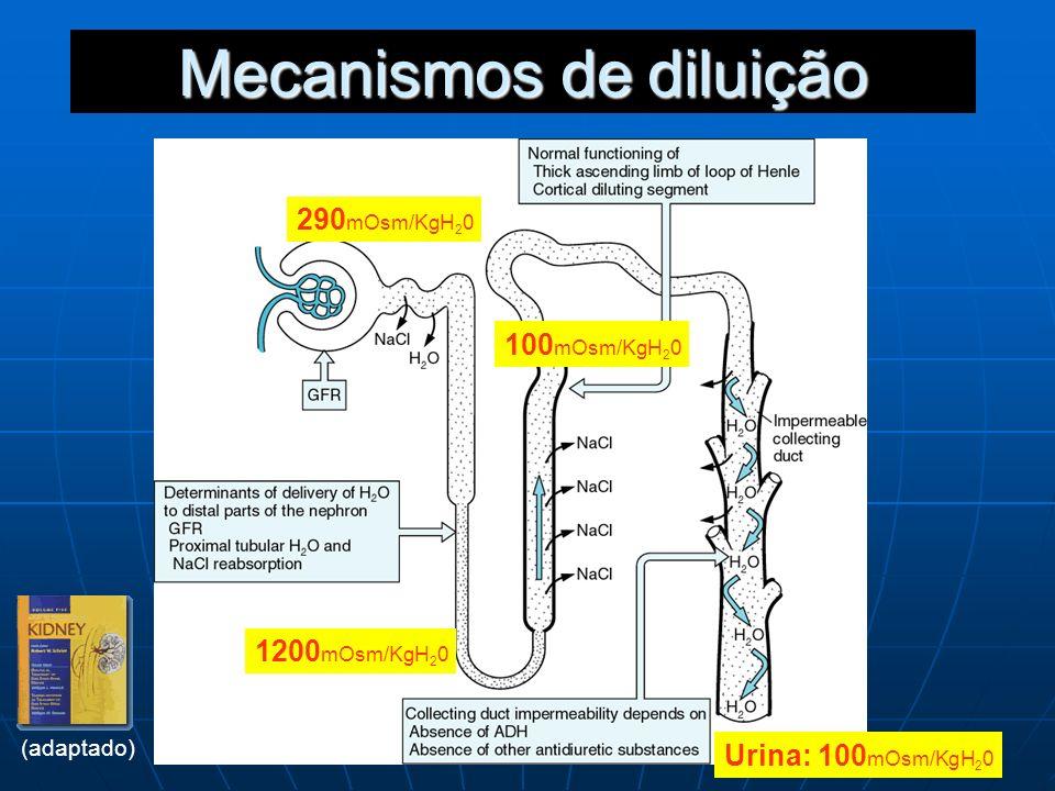 Mecanismos de diluição 290 mOsm/KgH 2 0 100 mOsm/KgH 2 0 Urina: 100 mOsm/KgH 2 0 1200 mOsm/KgH 2 0 (adaptado)
