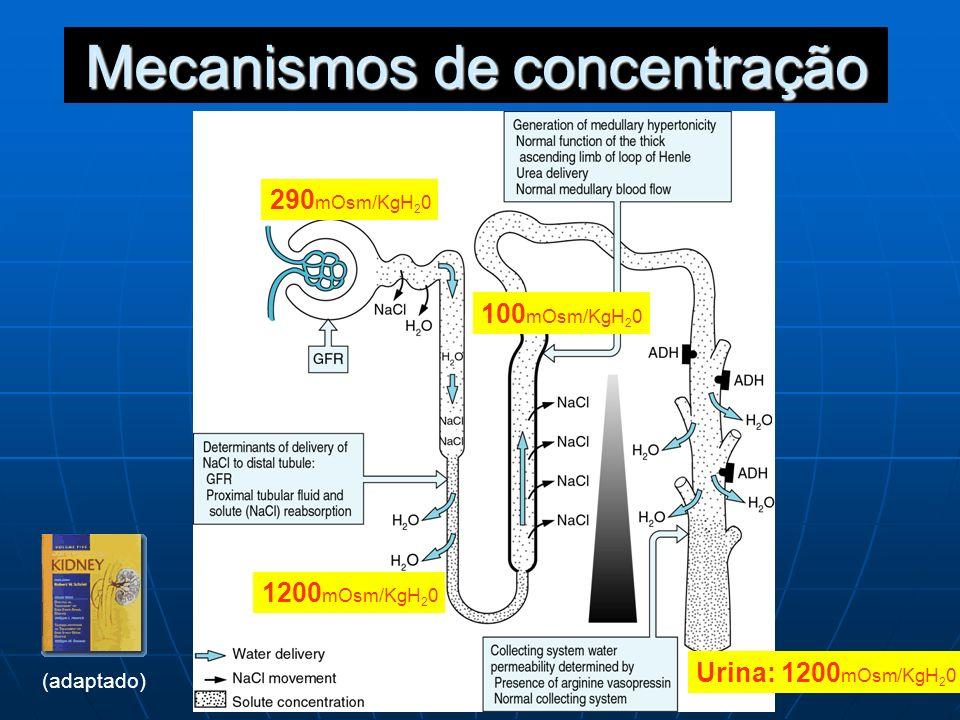 Mecanismos de concentração 290 mOsm/KgH 2 0 100 mOsm/KgH 2 0 Urina: 1200 mOsm/KgH 2 0 1200 mOsm/KgH 2 0 (adaptado)