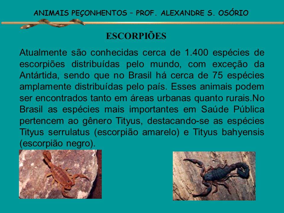 ANIMAIS PEÇONHENTOS – PROF. ALEXANDRE S. OSÓRIO ESCORPIÕES – MORFOLOGIA EXTERNA