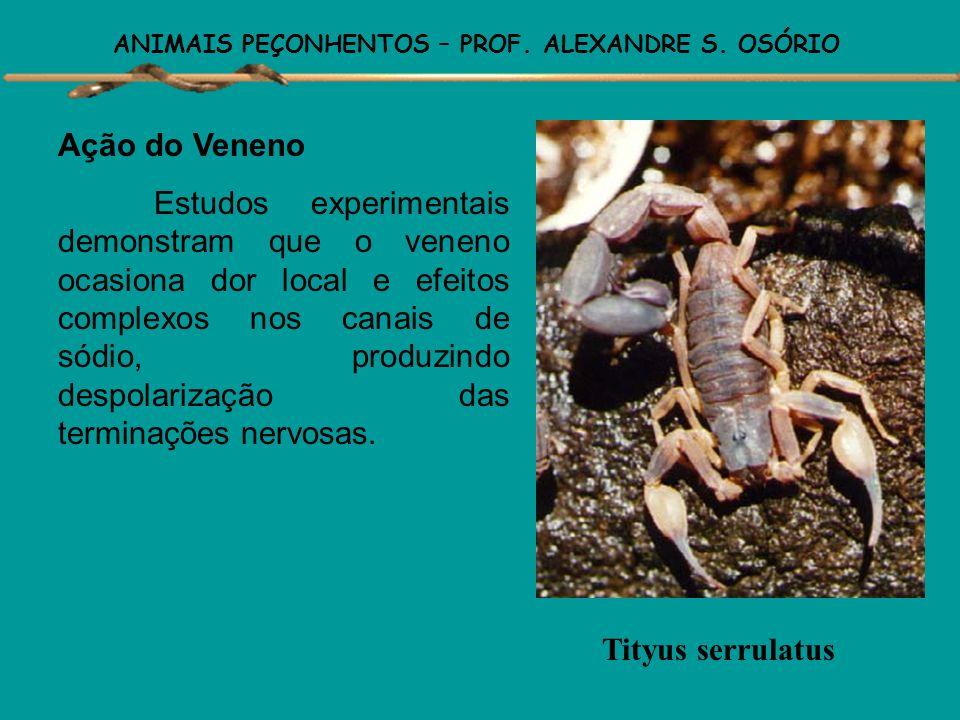 ANIMAIS PEÇONHENTOS – PROF. ALEXANDRE S. OSÓRIO ESCORPIÕES Atualmente são conhecidas cerca de 1.400 espécies de escorpiões distribuídas pelo mundo, co