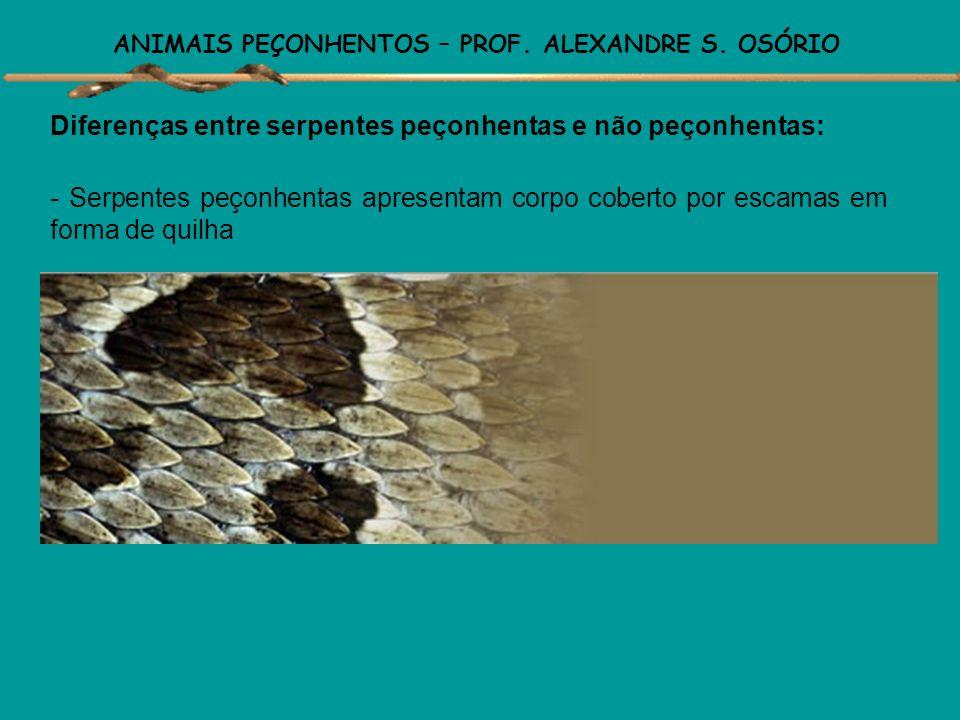 ANIMAIS PEÇONHENTOS – PROF. ALEXANDRE S. OSÓRIO Diferenças entre serpentes peçonhentas e não peçonhentas: - As jararacas, cascavel e a sururucu, possu