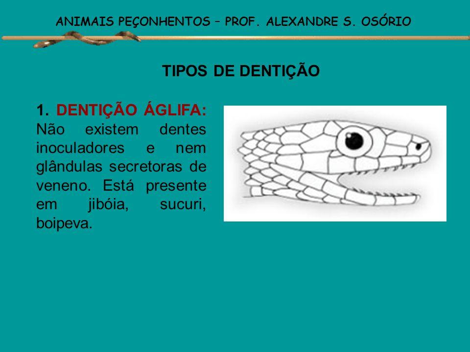 ANIMAIS PEÇONHENTOS – PROF. ALEXANDRE S. OSÓRIO GÊNEROS DE SERPENTES PEÇONHENTAS DO BRASIL · fosseta loreal presente · chocalho presente = Crotalus ·