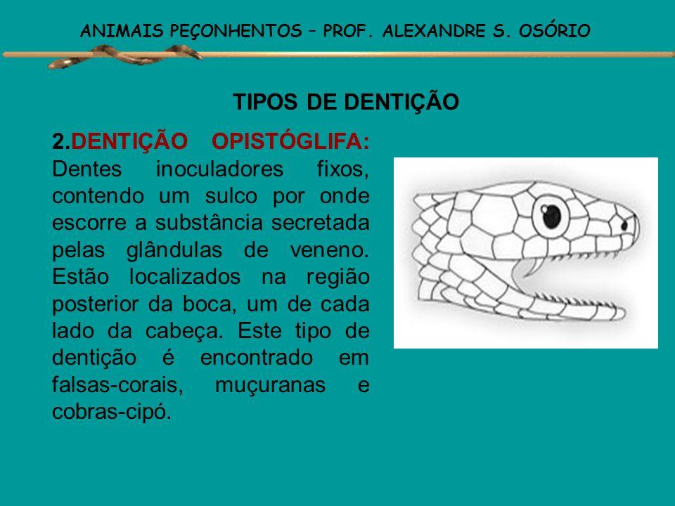 ANIMAIS PEÇONHENTOS – PROF. ALEXANDRE S. OSÓRIO TIPOS DE DENTIÇÃO 1. DENTIÇÃO ÁGLIFA: Não existem dentes inoculadores e nem glândulas secretoras de ve