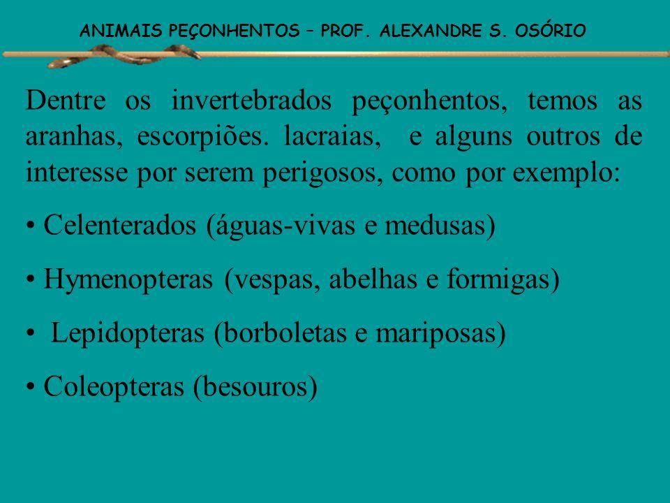 ANIMAIS PEÇONHENTOS – PROF. ALEXANDRE S. OSÓRIO Animais Venenosos – são aqueles que possuem veneno, mas são desprovidos de aparelho inoculador. Ex: sa