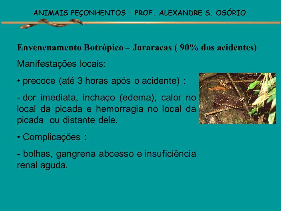 ANIMAIS PEÇONHENTOS – PROF. ALEXANDRE S. OSÓRIO 4) Gênero Micrurus: 31 variedades em todo o país. Provocam os acidentes mais graves, embora raros. Ven