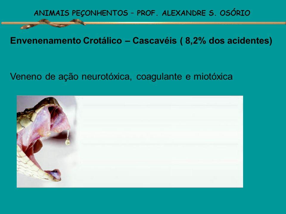 ANIMAIS PEÇONHENTOS – PROF. ALEXANDRE S. OSÓRIO Envenenamento Crotálico – Cascavéis ( 8,2% dos acidentes) Sinais e sintomas do envenenamento: Precoce