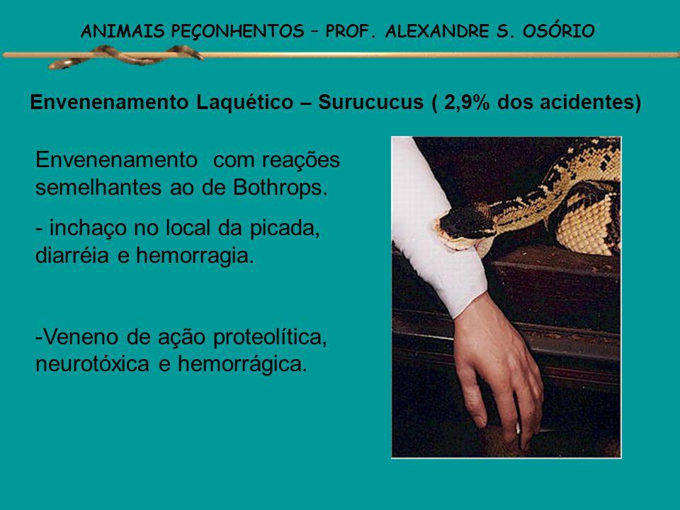 ANIMAIS PEÇONHENTOS – PROF. ALEXANDRE S. OSÓRIO Envenenamento Crotálico – Cascavéis ( 8,2% dos acidentes) Veneno de ação neurotóxica, coagulante e mio