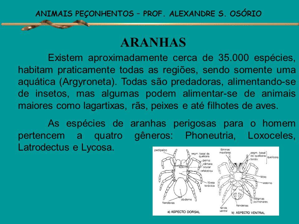 ANIMAIS PEÇONHENTOS – PROF. ALEXANDRE S. OSÓRIO Dentre os invertebrados peçonhentos, temos as aranhas, escorpiões. lacraias, e alguns outros de intere