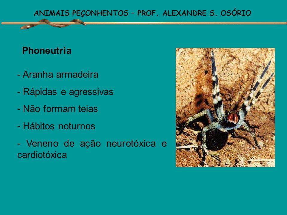 ANIMAIS PEÇONHENTOS – PROF. ALEXANDRE S. OSÓRIO ARANHAS Existem aproximadamente cerca de 35.000 espécies, habitam praticamente todas as regiões, sendo