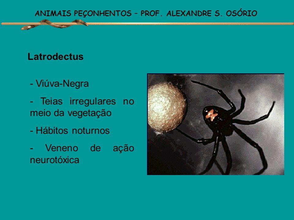 ANIMAIS PEÇONHENTOS – PROF. ALEXANDRE S. OSÓRIO Loxoceles - Aranha marrom - Agressivas - Teias irregulares em locais escuros - Hábitos noturnos - Vene