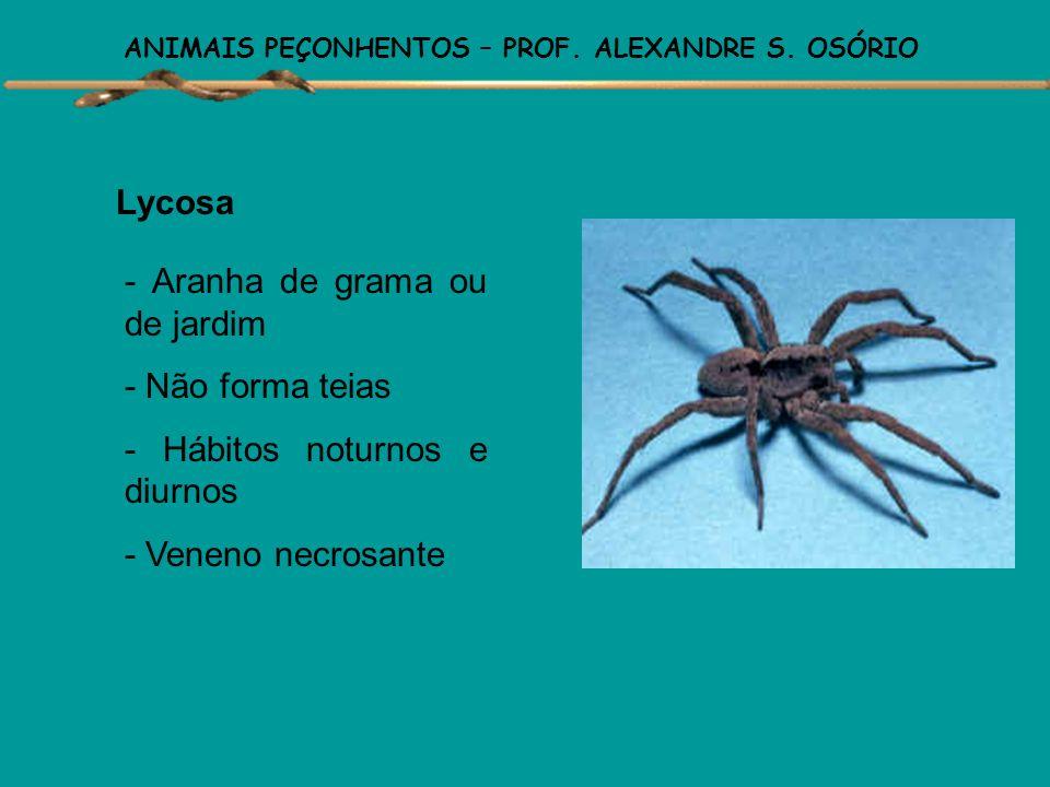 ANIMAIS PEÇONHENTOS – PROF. ALEXANDRE S. OSÓRIO Latrodectus - Viúva-Negra - Teias irregulares no meio da vegetação - Hábitos noturnos - Veneno de ação
