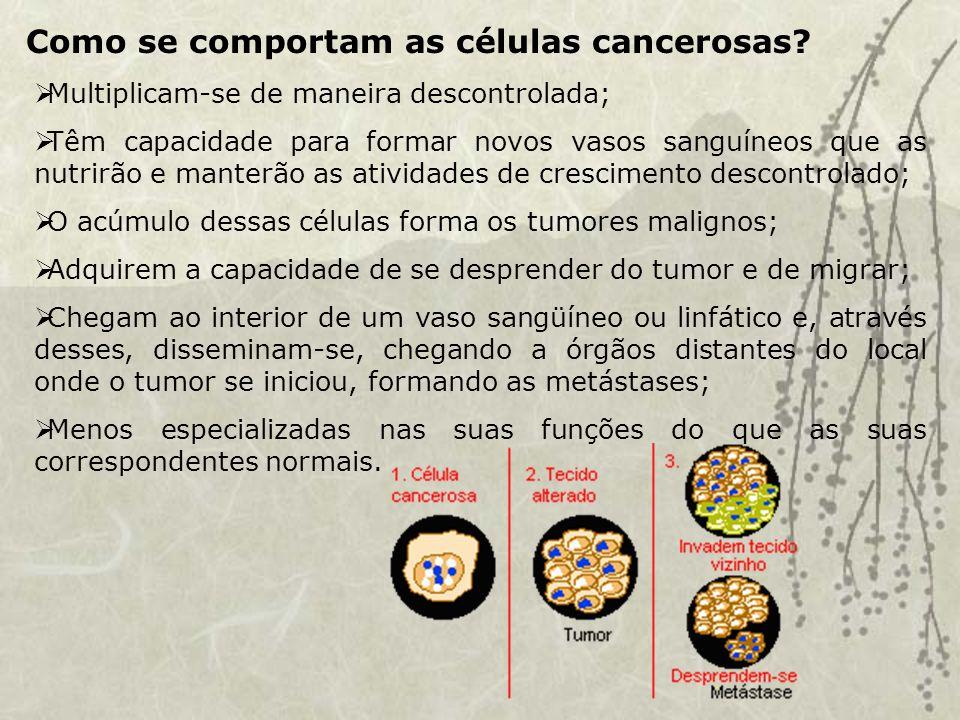 Como se comportam as células cancerosas.