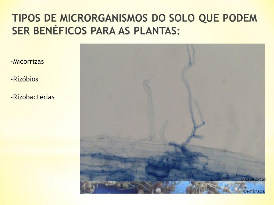 TIPOS DE MICRORGANISMOS DO SOLO QUE PODEM SER BENÉFICOS PARA AS PLANTAS: -Rizóbios -Rizobactérias -Micorrizas © embrapa © isabelbrito