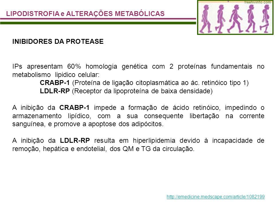 LIPODISTROFIA e ALTERAÇÕES METABÓLICAS freehivinfo.com INIBIDORES DA PROTEASE IPs apresentam 60% homologia genética com 2 proteínas fundamentais no me