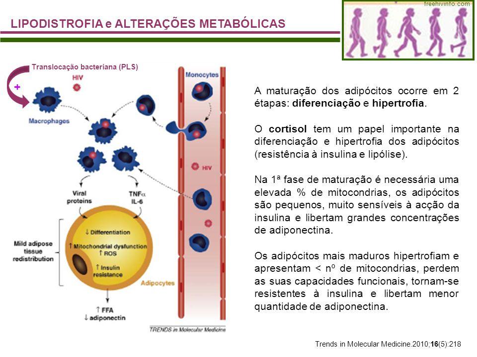 LIPODISTROFIA e ALTERAÇÕES METABÓLICAS freehivinfo.com Trends in Molecular Medicine.2010;16(5):218 Translocação bacteriana (PLS) + A maturação dos adi