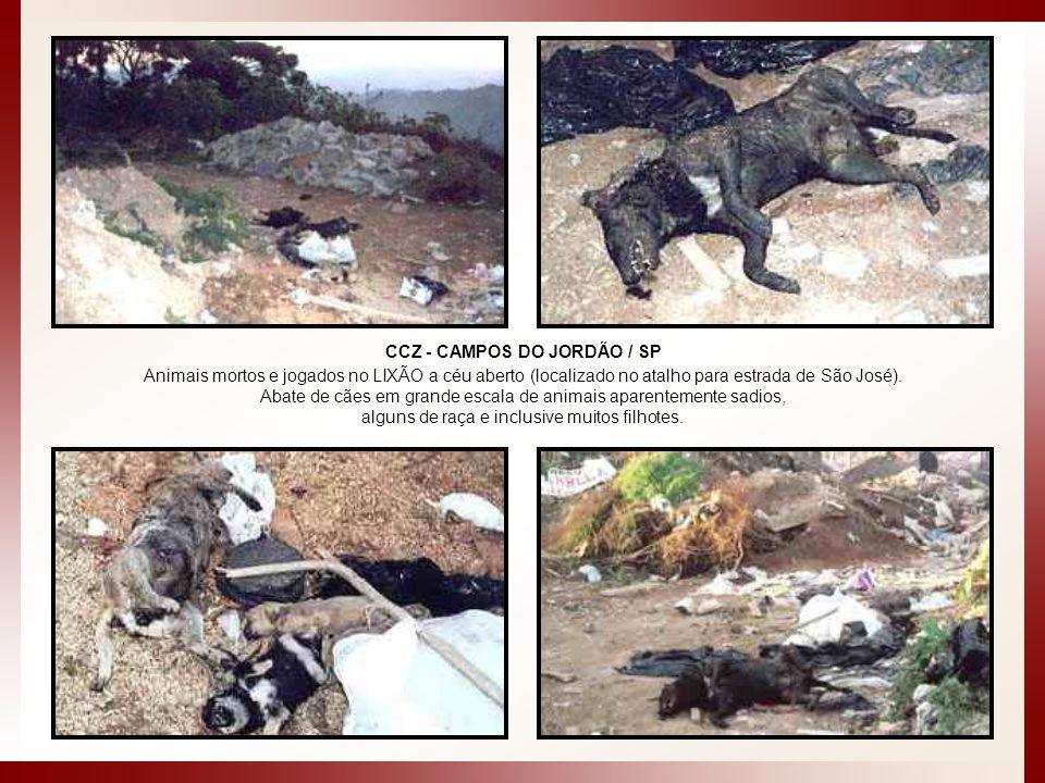 CCZ - CAMPOS DO JORDÃO / SP Animais mortos e jogados no LIXÃO a céu aberto (localizado no atalho para estrada de São José). Abate de cães em grande es