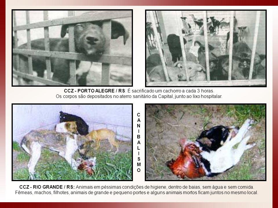 CCZ - PORTO ALEGRE / RS: É sacrificado um cachorro a cada 3 horas. Os corpos são depositados no aterro sanitário da Capital, junto ao lixo hospitalar.