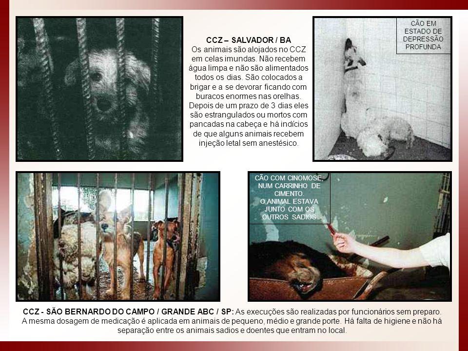 CCZ - SÃO BERNARDO DO CAMPO / GRANDE ABC / SP: As execuções são realizadas por funcionários sem preparo. A mesma dosagem de medicação é aplicada em an