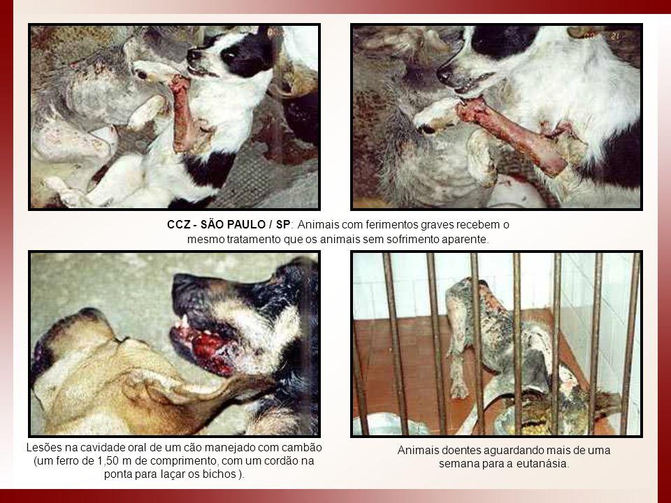 CCZ - SÃO PAULO / SP: Animais com ferimentos graves recebem o mesmo tratamento que os animais sem sofrimento aparente. Animais doentes aguardando mais