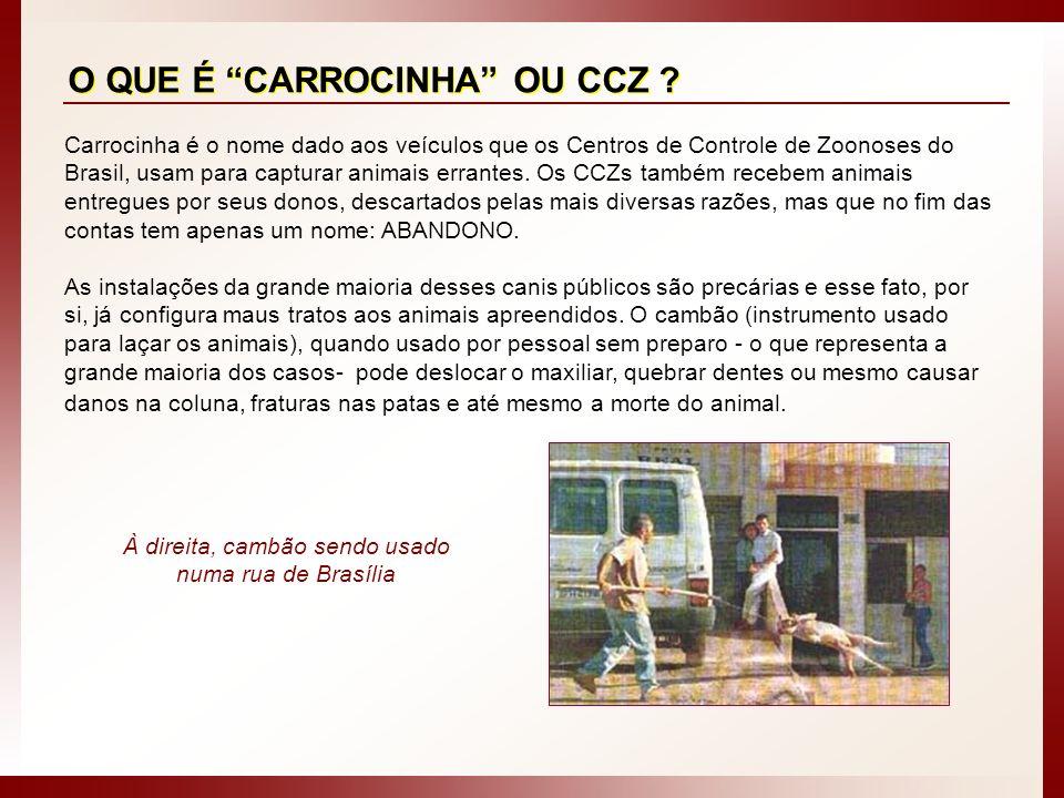 Carrocinha é o nome dado aos veículos que os Centros de Controle de Zoonoses do Brasil, usam para capturar animais errantes. Os CCZs também recebem an