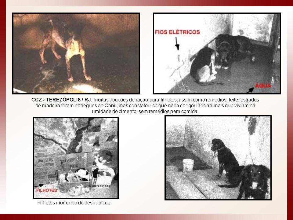 CCZ - TEREZÓPOLIS / RJ: muitas doações de ração para filhotes, assim como remédios, leite, estrados de madeira foram entregues ao Canil, mas constatou