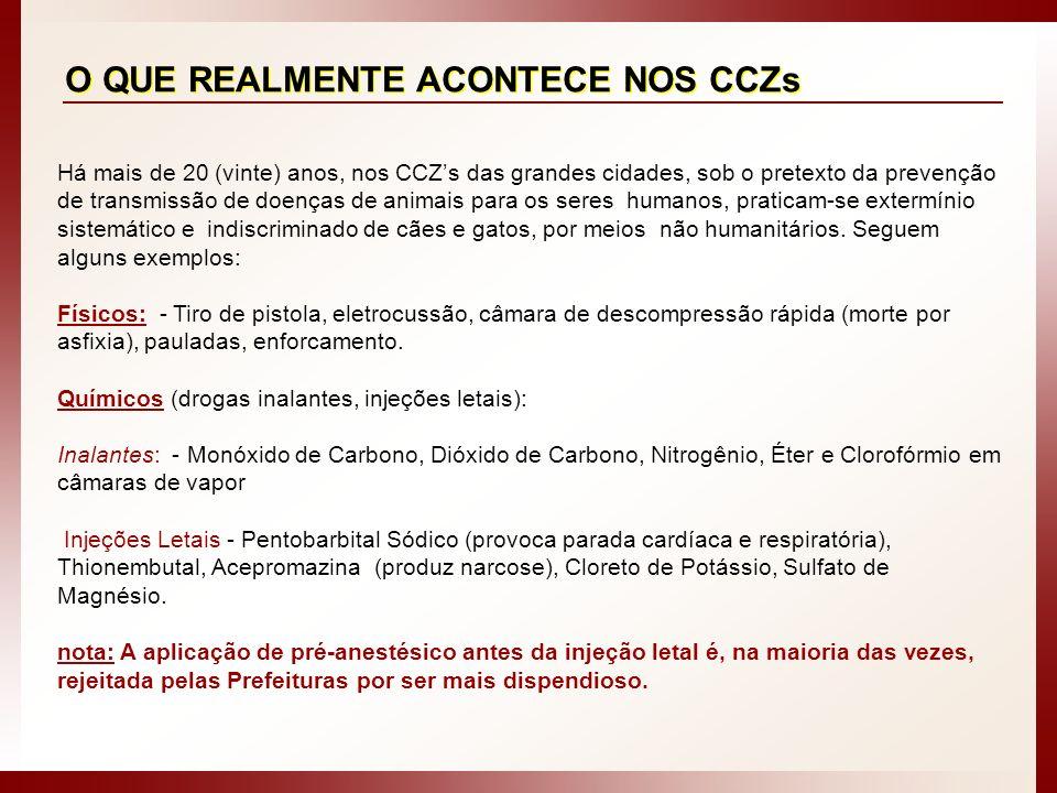 O QUE REALMENTE ACONTECE NOS CCZs Há mais de 20 (vinte) anos, nos CCZs das grandes cidades, sob o pretexto da prevenção de transmissão de doenças de a