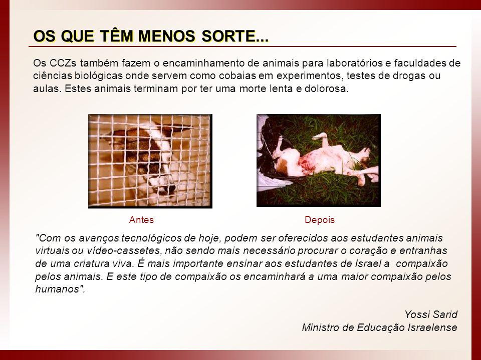 Os CCZs também fazem o encaminhamento de animais para laboratórios e faculdades de ciências biológicas onde servem como cobaias em experimentos, teste