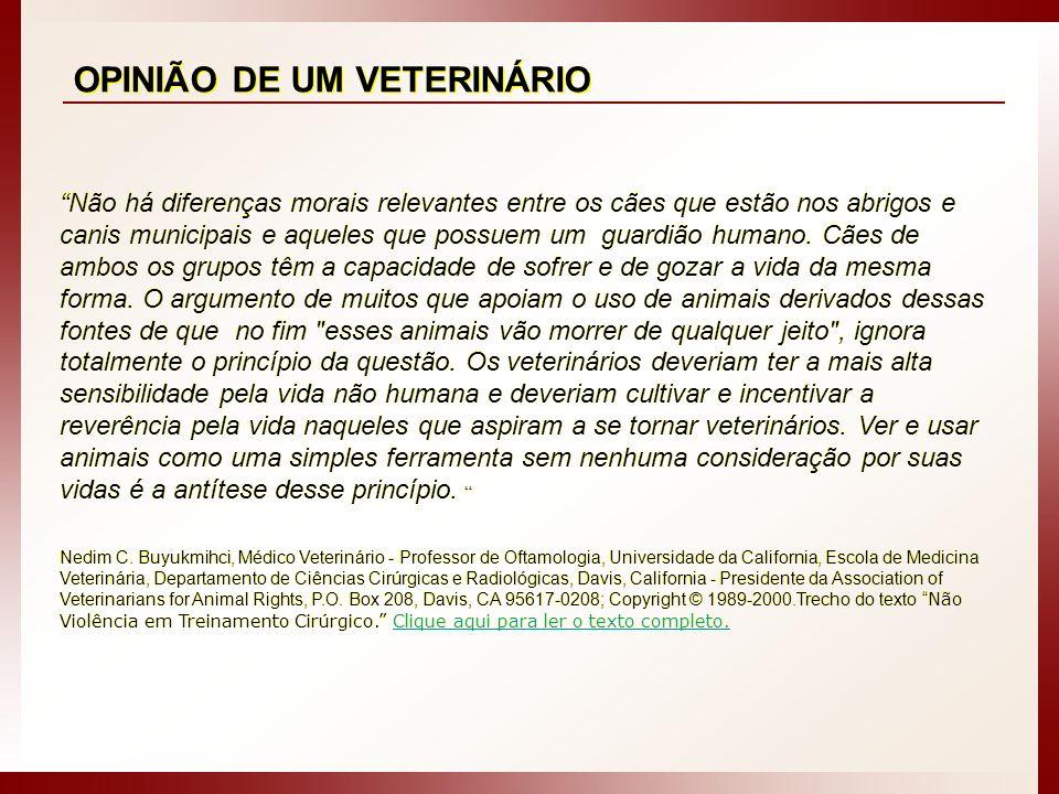 CCZ - SÃO PAULO / SP : O triste fim de dezenas de cães com e sem raça, machos, fêmeas, adultos e filhotes, muitas vezes sadios.