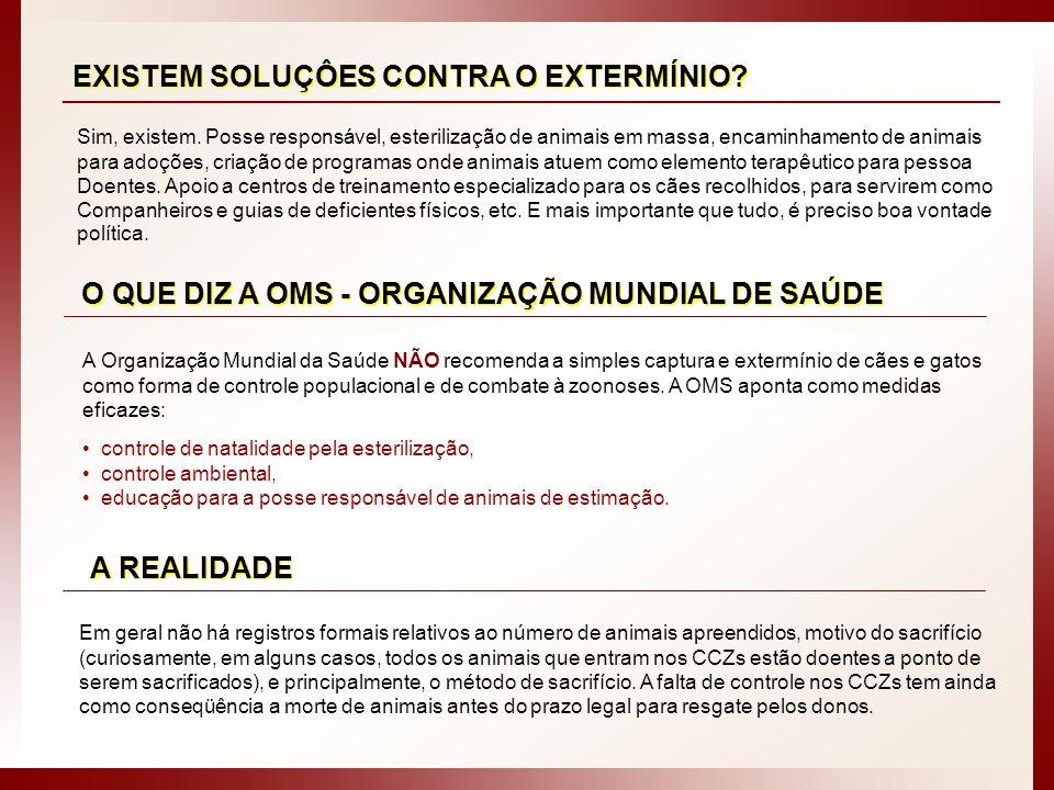 CCZ - SÃO PAULO / SP: Animais de porte grande mantidos em canil individual.