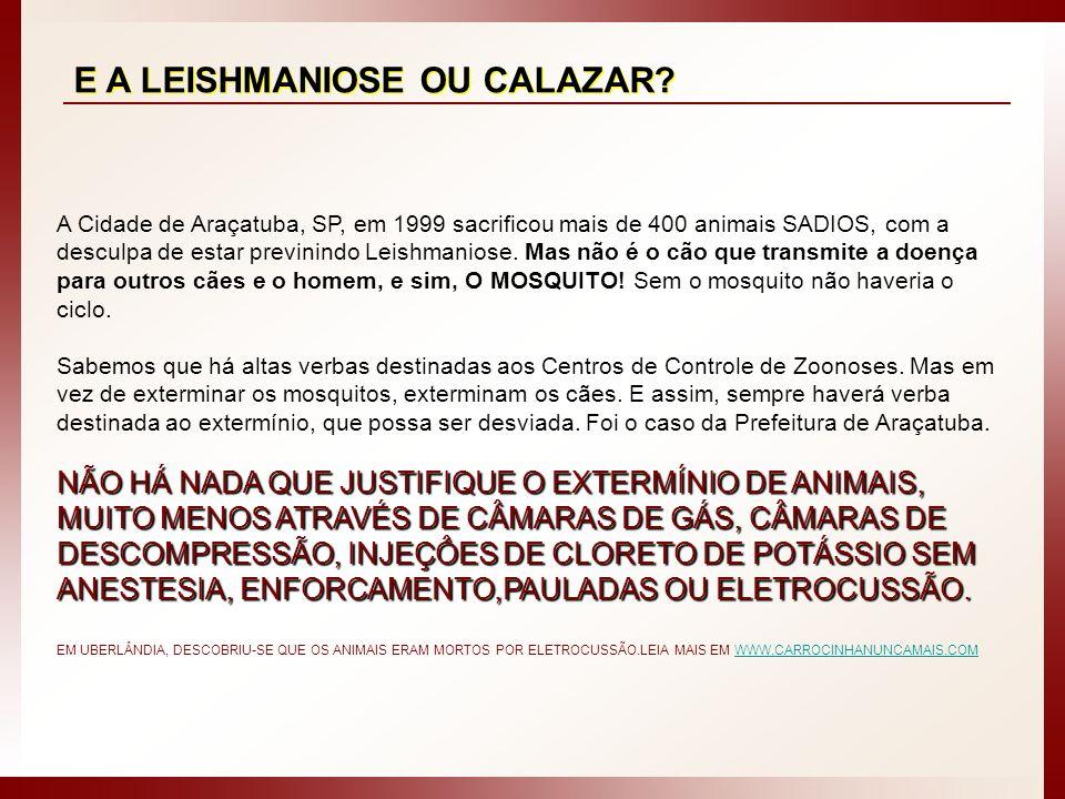 E A LEISHMANIOSE OU CALAZAR? A Cidade de Araçatuba, SP, em 1999 sacrificou mais de 400 animais SADIOS, com a desculpa de estar previnindo Leishmaniose