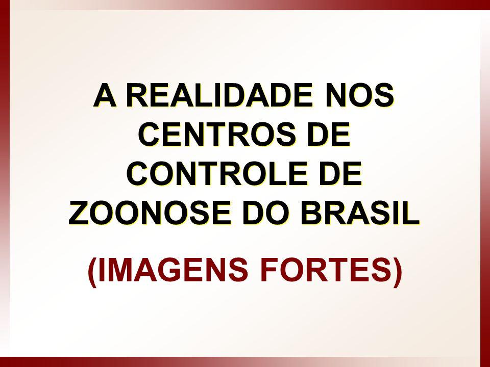 A REALIDADE NOS CENTROS DE CONTROLE DE ZOONOSE DO BRASIL (IMAGENS FORTES)