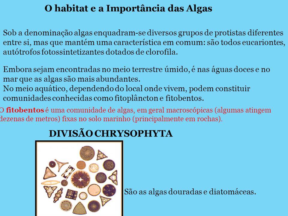 O habitat e a Importância das Algas Sob a denominação algas enquadram-se diversos grupos de protistas diferentes entre si, mas que mantém uma caracter