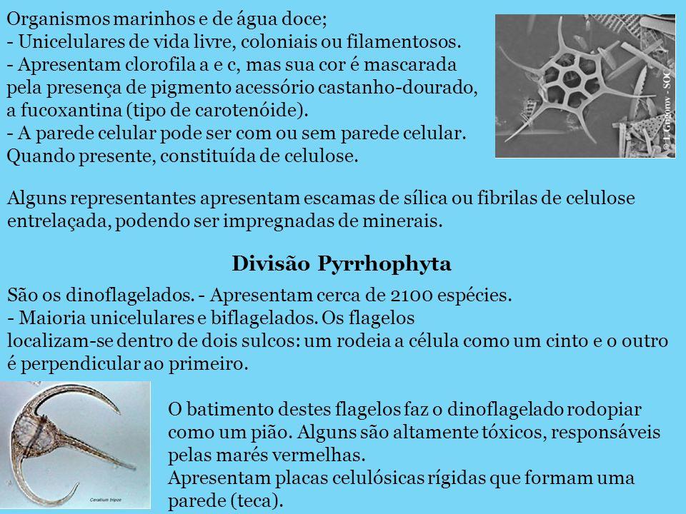 Organismos marinhos e de água doce; - Unicelulares de vida livre, coloniais ou filamentosos. - Apresentam clorofila a e c, mas sua cor é mascarada pel