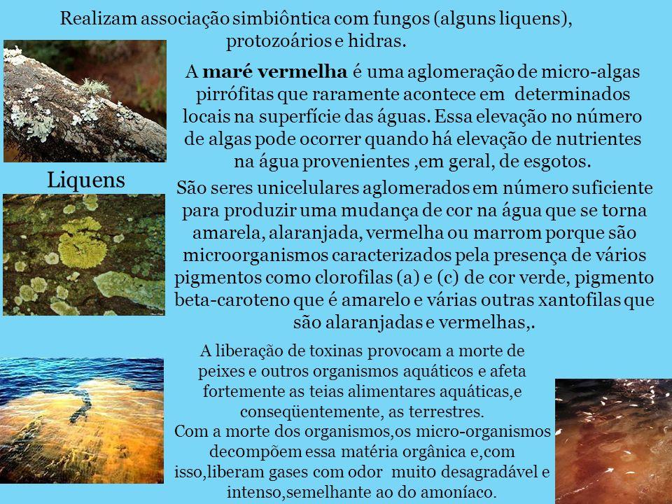 Realizam associação simbiôntica com fungos (alguns liquens), protozoários e hidras. Liquens A maré vermelha é uma aglomeração de micro-algas pirrófita