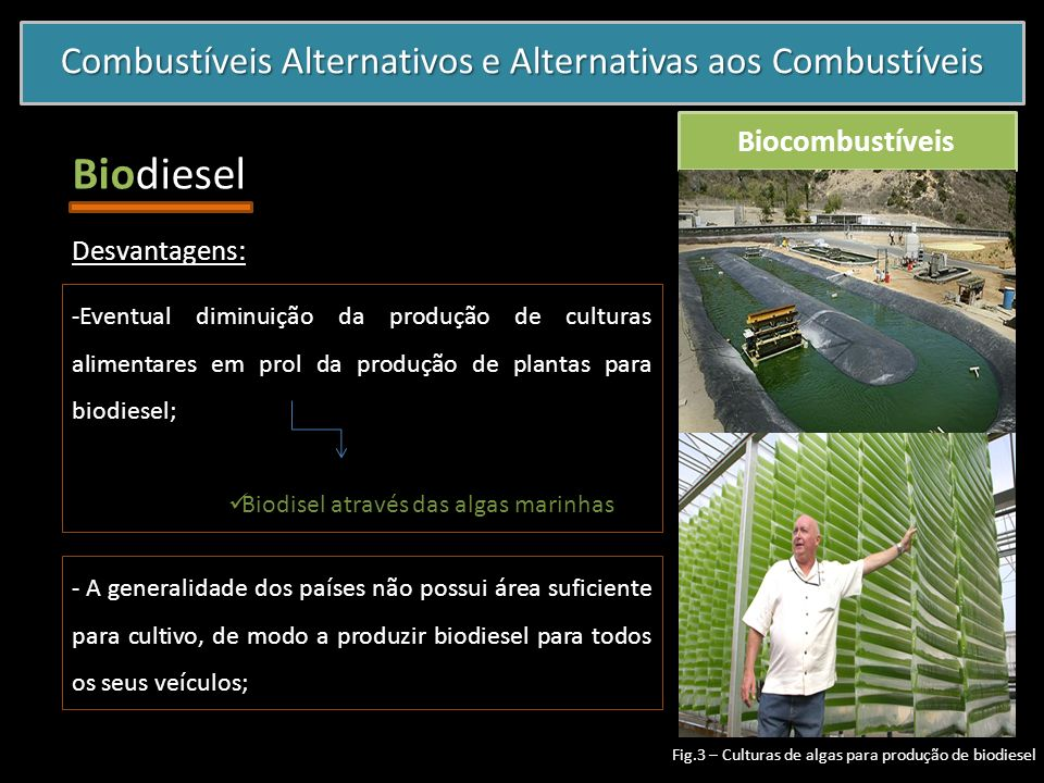 Combustíveis Alternativos e Alternativas aos Combustíveis Biocombustíveis Biodiesel -Eventual diminuição da produção de culturas alimentares em prol d